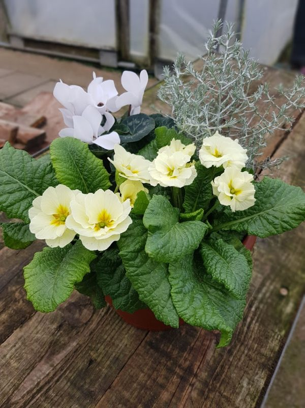 Winter Patio Pot 3